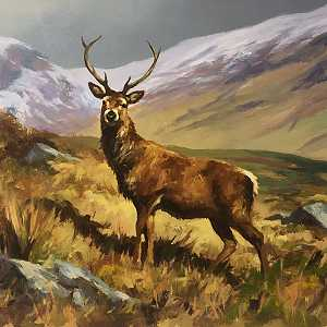 Winter Stag Donegal
