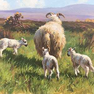 The Spring Lambs