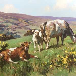 Cattle in Co Antrim