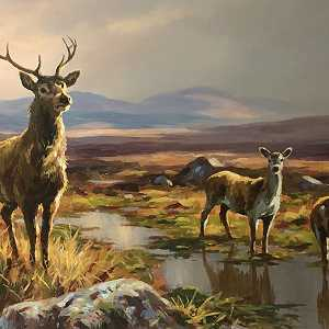 Stag and Deers Donegal