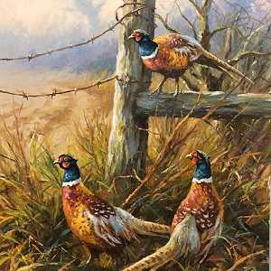 Pheasants Near Kilrea