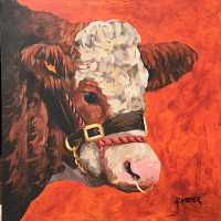 The Simmental Bull